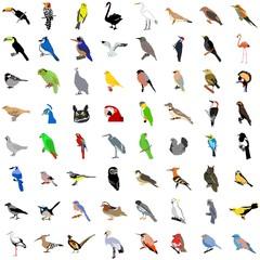 Big collection of birds. Vector