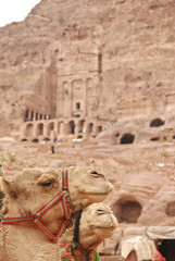 Camel and the Royal Tombs in Petra