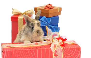 little rabbit between the boxes with gifts