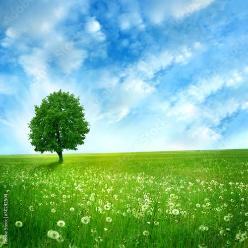 трава дерево поле  № 809793  скачать