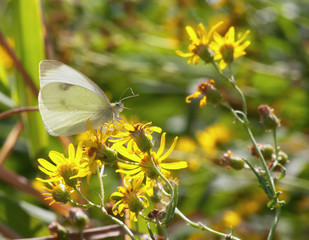 butterfly on yellow flower on a summer day