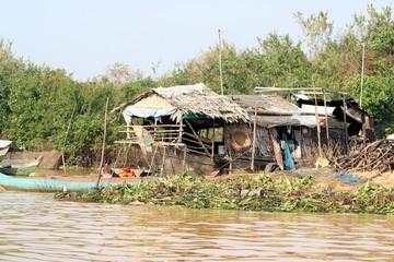 Kambo Life 8