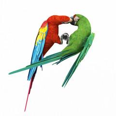 two kissing parrots