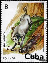 CUBA - CIRCA 1981 Horse 8c