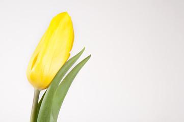 Tulpenkof