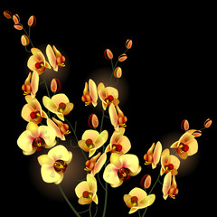 Orchid yellow flower isolated on black background