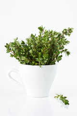 Bunch of a fresh citric thyme in a white cup.