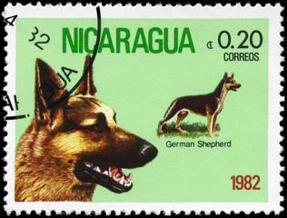 NICARAGUA - CIRCA 1982 German Shepherd