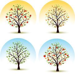 Apple tree/Seasons - spring, summer, autumn