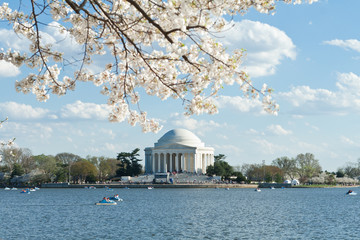 Jefferson Memorial Tidal Basin Cherry Blossom DC