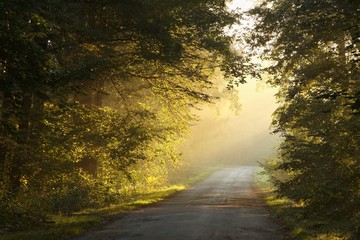 Keuken foto achterwand Bos in mist Country road in the autumn forest on a foggy morning