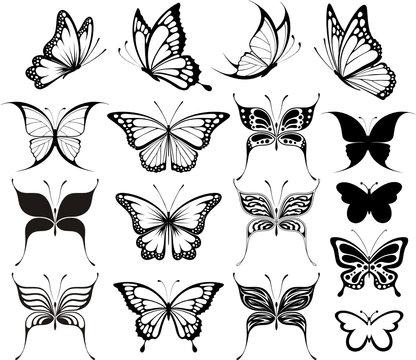 butterflies clipart fashionable