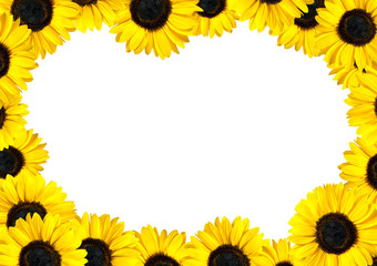 Fresh Sunflower Frame with White Background