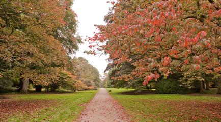 Trees in Autumn colours at Westonbirt Arboretum, UK