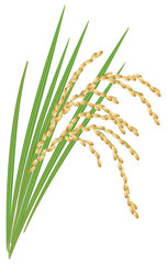 Spikelet of rice with the leaves on a white background. Vector i
