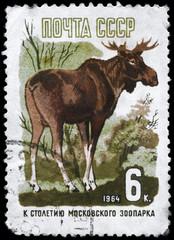 USSR - CIRCA 1964 Elk