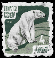 USSR - CIRCA 1964 Polar Bear