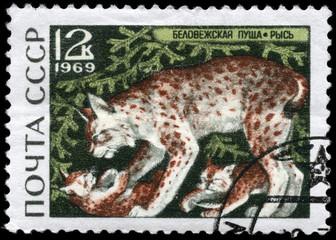 USSR - CIRCA 1969 Lynx