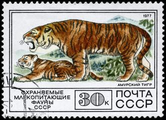 USSR - CIRCA 1977 Tiger