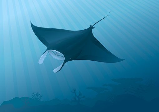 "Manta Ray flying above the seabed. ""Full compatible gradients"""
