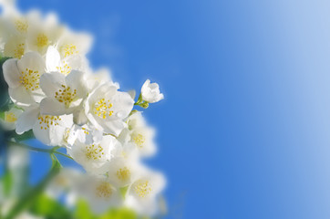 Spring abstract background.