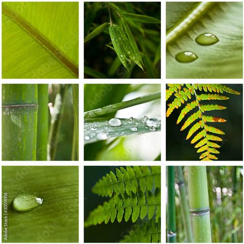 Composition nature zen photo libre de droits sur la banque d 39 images image 30514916 - Image zen nature ...