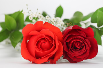 Coral & Red Rose Duo