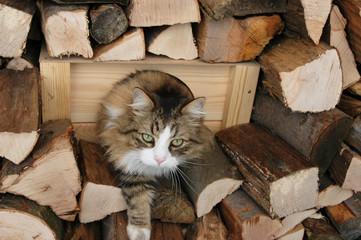 Katze im Holzstoß