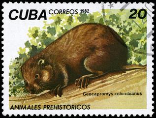 CUBA - CIRCA 1982 Hutia