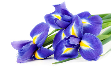 Self adhesive Wall Murals Iris iris bouquet