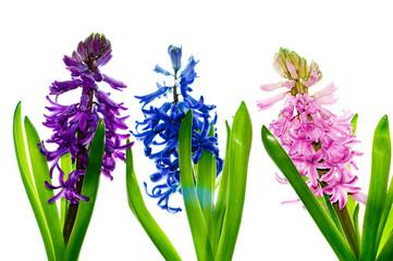 Spring trinity