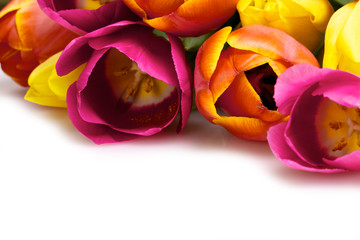 red, yellow and pink tulips isolated on white