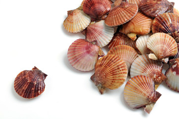 Scallops, Shells of Pilgrims, mathematics one vs many.