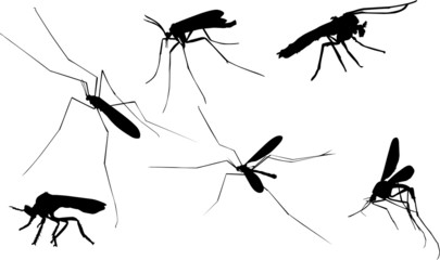 six mosquito silhouettes on white
