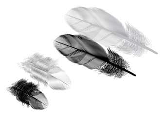 two grey feathers with shadows