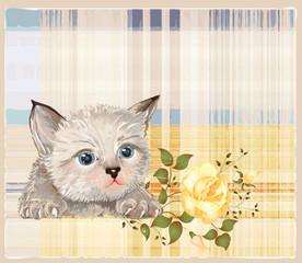 fluffy kitten  with rose