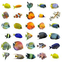 groupe de poissons tropicaux