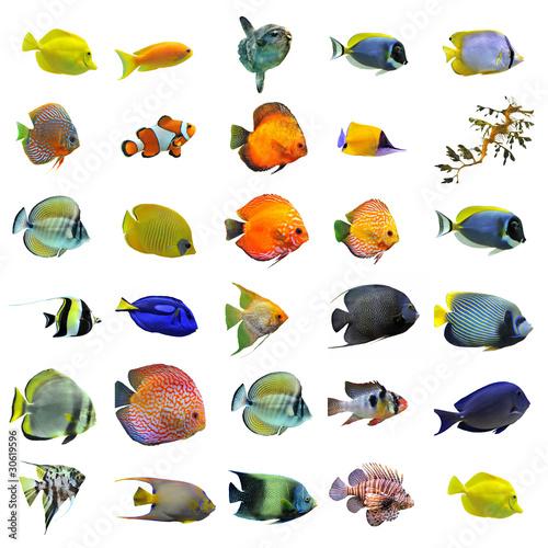 Groupe de poissons tropicaux photo libre de droits sur for Poisson tropicaux