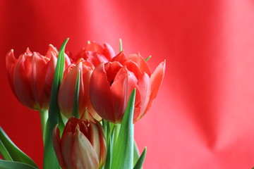 Obraz Spring - fototapety do salonu