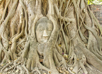 stone buddha head in the tree roots, Ayutthaya is old capital of