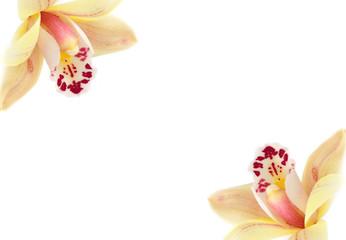 Biglietto con orchidee