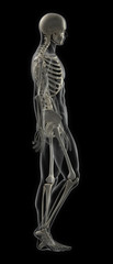 Walking Male Full Skeleton Scan
