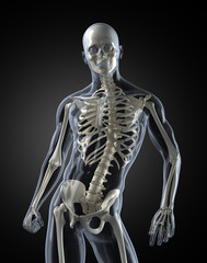 Human Body skeleton Scan