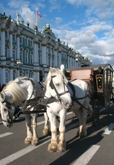 horse cart near museum in Saint Petersburg
