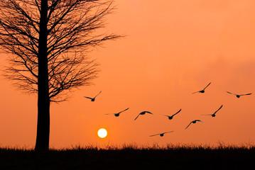 Birds fly to the sun.