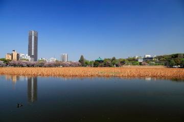 不忍池 (東京・上野公園)