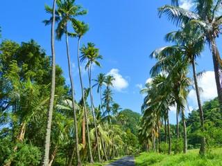 Strada Esotica di Palme-Palmtrees Exotic Street