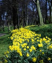Ormeau Park, Belfast, Ireland