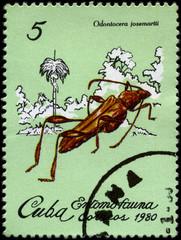 CUBA - CIRCA 1980 Beetle