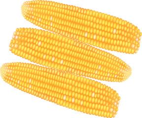 Groups of raw corns